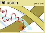 HEPA filter Diffusion