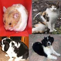 Cat, Dog, Rabbit, Hamster